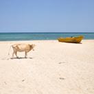 Uppuveli Beach and Nilaveli Beach photos click here